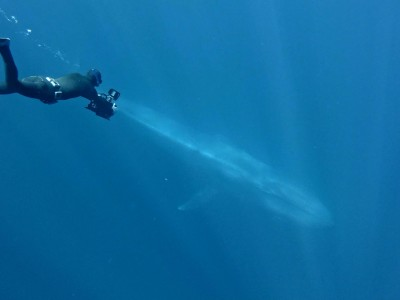 Ken free diving to a blue whale 2